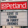 love in furry