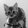joyquality: kittenhat