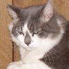 ashi: boo sleepy