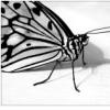 b1tter_fly userpic