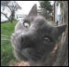 cat- say WHAT?