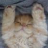 cats- I surrender!