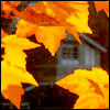 Rachel M Brown: Autumn: small leaves