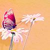 lis4loser userpic