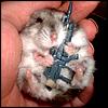 machine gun hamster
