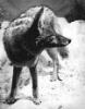 mountaincoyote userpic