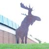 moose_ronin userpic