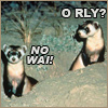 Ferret - ORLY? NOWAI!