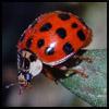 vibrant_ladybug userpic