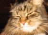 Кошка, которая смотрела на Короля