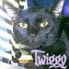 twiggysixtoes userpic
