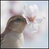 ☆ Sparrow ☆