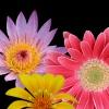eclecticfan: flowersX3