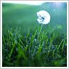 ifell2earth userpic