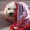 hurleysangel userpic