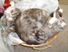 Cats in laundry basket