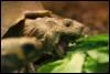 ju_tortoise: obed