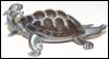 ju_tortoise