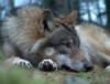 crownwolf userpic