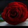 esteldur: scarlet carson