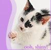 Kittens in the Dark - Recs!