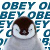 obey the penguin