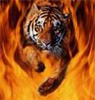 Тигр в огне