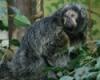 Dubious Monkey