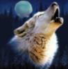 Savage Wolf: pic#54829530