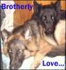 phoenix1979: Brothers