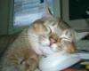 flat_cat