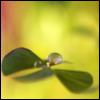 galinamaxa userpic