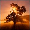 солнце-сквозь-дерево