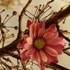flower, mei hua