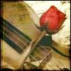 rose, violin