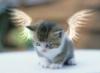 котенок с крыльями