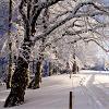 Yavanna: Winter by bubbles83