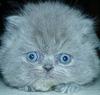 felinebird userpic