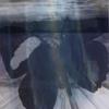 ariadne_dreams userpic