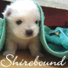 Shirebound: Pup in Blanket -- slightlytookish