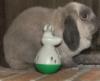 rabbit_princess userpic