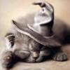 котвшляпе