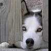 werewolfsark userpic