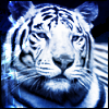 tigerknight03 userpic