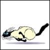 tash_n_tail: Hyper Kitty