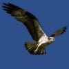 loengrin_2006 userpic