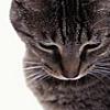 redrayne717 userpic