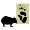 wombat1138
