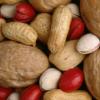 Nut Programmer