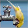bird on faucet